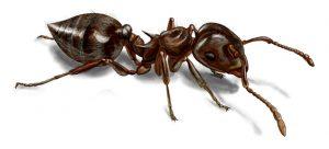pest control in staten island