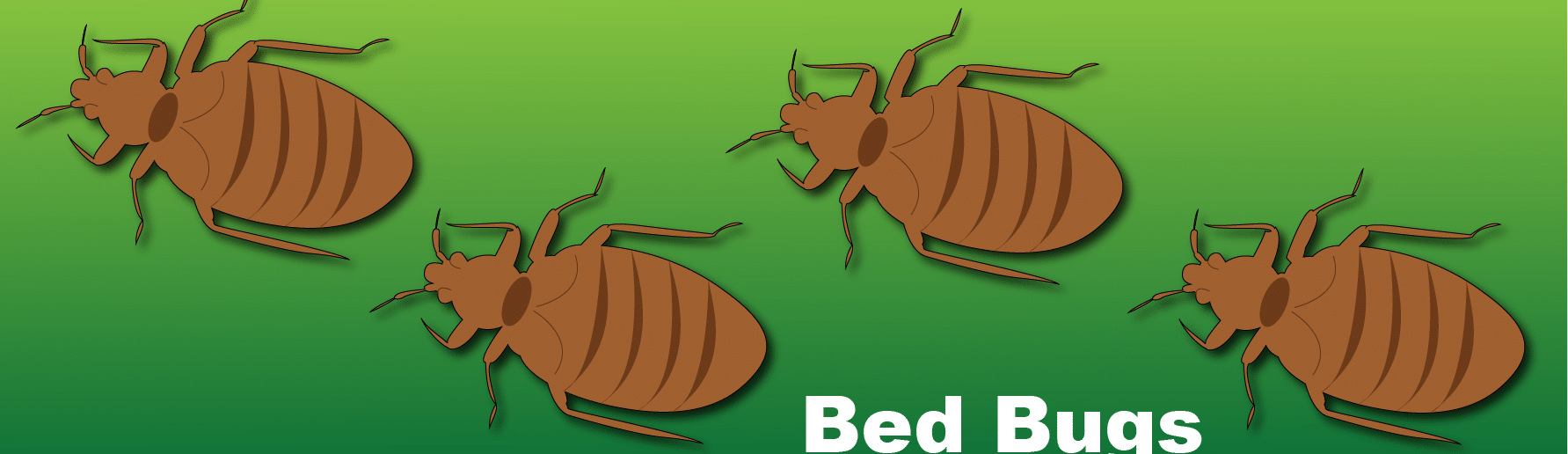 bed bugs infographic header