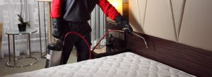 Bed Bug control treatment technique
