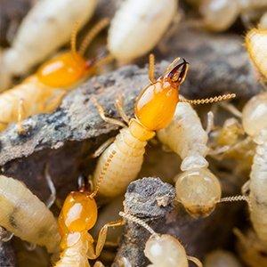 termite control staten island