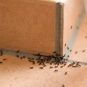 ant control staten island
