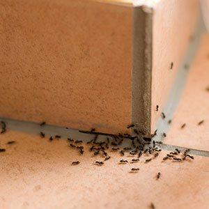 ant control staten island