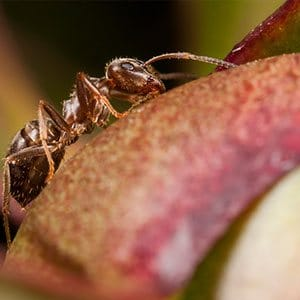 ant exterminators staten island