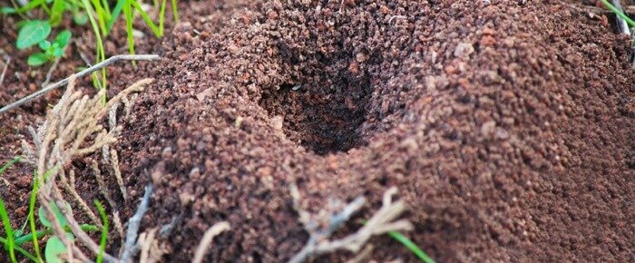 fire-ant-hole