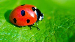 lady-bugs-staten-island
