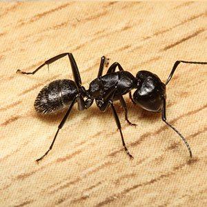 ant extermination staten island